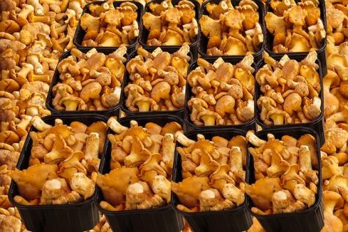 Как выращивать грибы лисички в домашних условиях