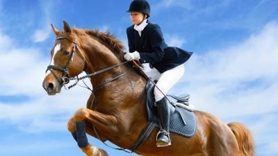 Конный спорт:как заработать в интернете на верховой езде?
