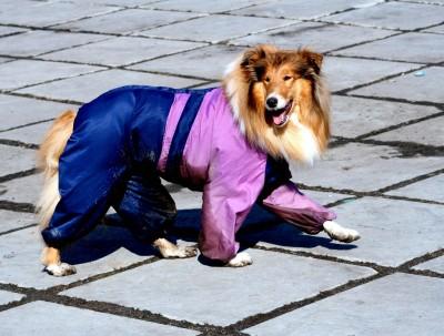 Одежда для кошек и собак своими руками